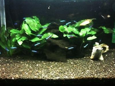 ペットの熱帯魚♪