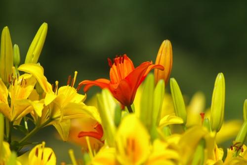 黄色とオレンジのコントラスト
