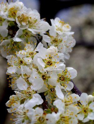 かわいらしい桃の花♪