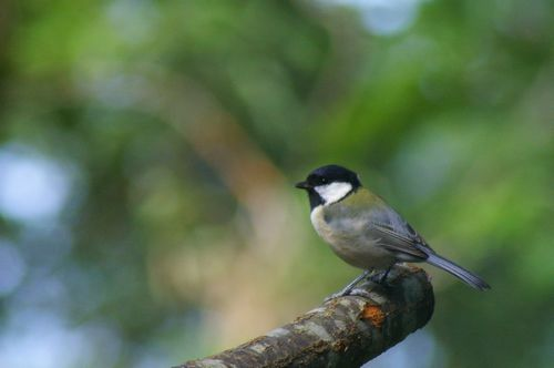 鳥撮りました!