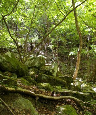 コケの美しい森。