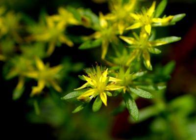 コケの中に咲く花