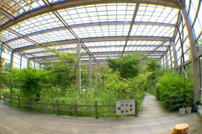 オオムラサキのジャングル