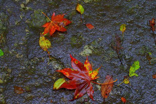 そこには秋が・・・