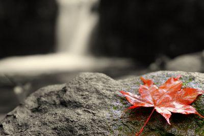 秋来たる。